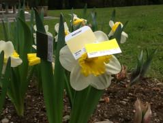 Pantonizing Easter
