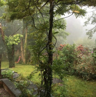 Misty morning in the garden